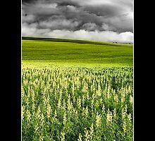 Fields by Kirk  Hille