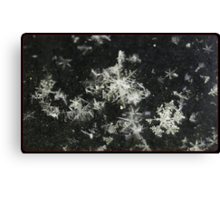 Congregating Flakes. Canvas Print