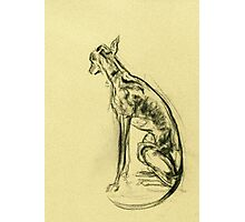 Whippet Sketch Photographic Print