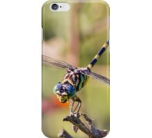 Australian Tiger Dragonfly iPhone Case/Skin