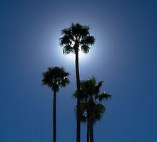 Clear Blue Sky w/ Sun behind Palms by richard-harlos