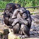 Chimps by TerraChild
