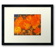 Wild Poppies (oil on canvas 23 X 30 cm) Framed Print