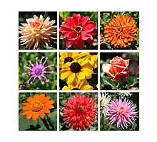 A collage of flowers  Photographic Print