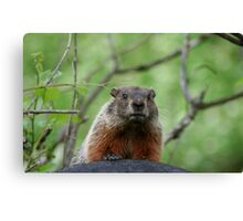 REDREAMING GROUNDHOG Canvas Print