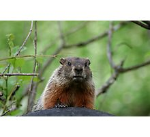 REDREAMING GROUNDHOG Photographic Print
