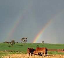 cows at the end of the rainbow by Tim Eckert