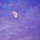 Looking up at the violet sky by Scott Mitchell