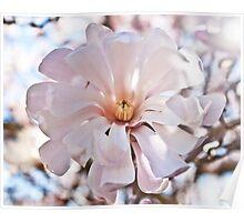 Star Magnolia pink Poster