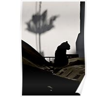 Cat and Shadows Poster