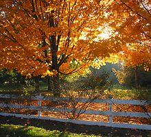 Fall Scene by axb500