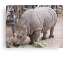 magestic rhino from az Canvas Print