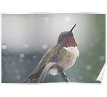 hummingbird in the rain guarding the feeder Poster