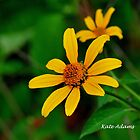 Mellow Yellow by Kate Adams