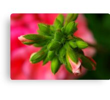 Hairy Buds Canvas Print
