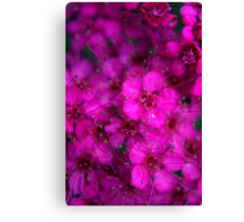 Pink All Over Canvas Print