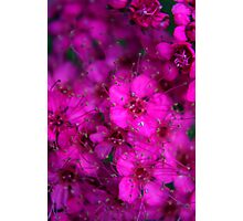 Pink All Over Photographic Print