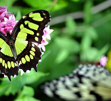 Colorful Butterfly by soulphoto