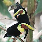 Its Toucan Time by Carol Barona
