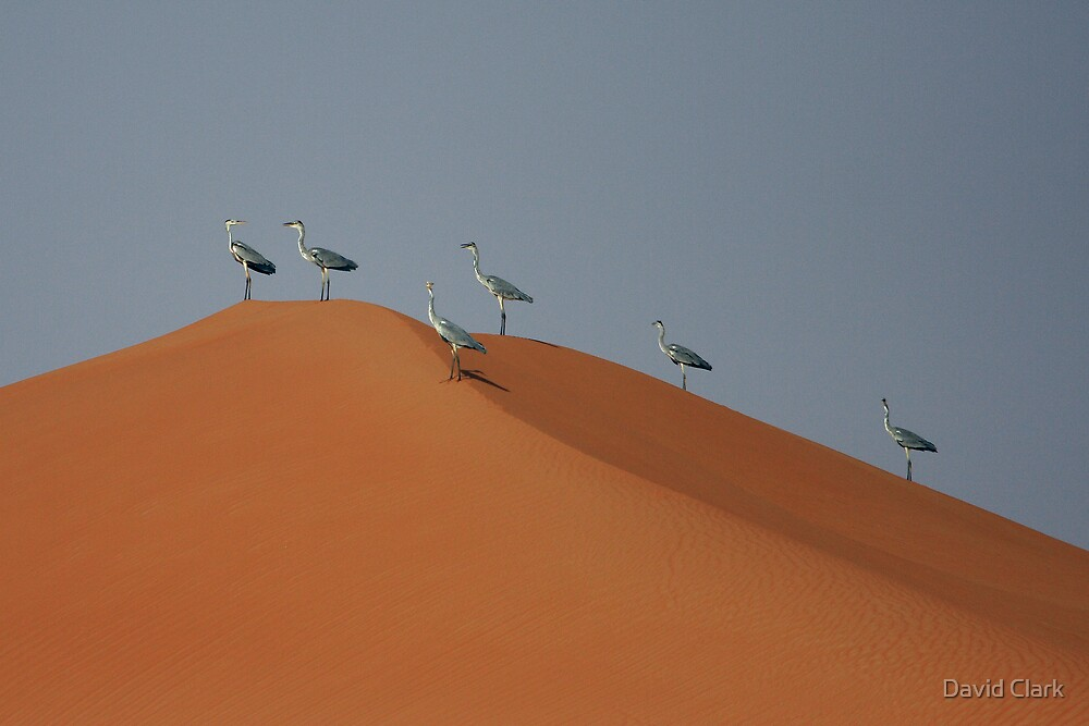 Grey Herons and Dunes by David Clark