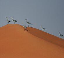 Grey Herons and Dunes by David Clark