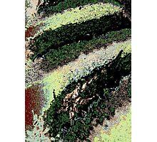 Modern moss, abstract, photo art Photographic Print