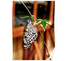 Rice Paper Butterfly Poster
