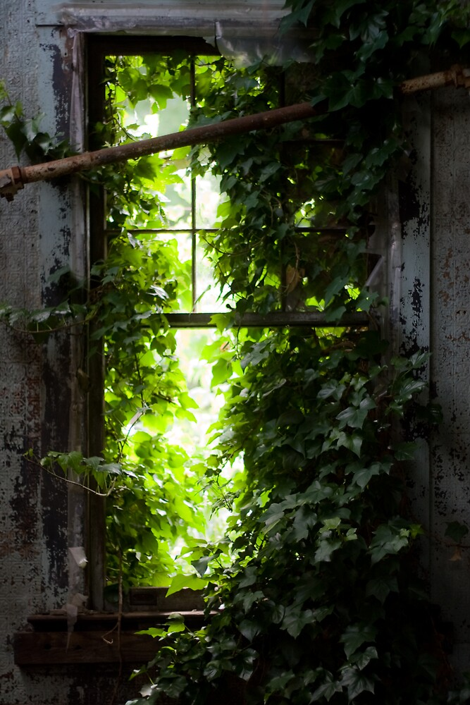 Nature's Green Grasp by PolarityPhoto
