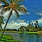 Florida by Mandy Wiltse