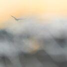 Flight by Mary Ann Reilly