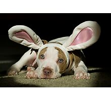 Rabbit Pup Photographic Print