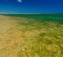 Lake Clifton Stromatolites by Penny Smith