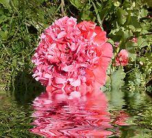 Frilly Poppy flooded by hilarydougill