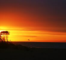Coastal Sunset by Steve Blake : - Akuna Photography Bendigo