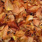 Autumn leaves by warriorprincess