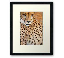 Detail of Cheetah Face - Namibia Framed Print