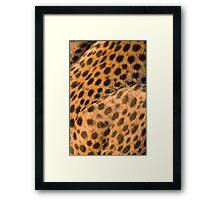Cheetah coat Framed Print