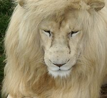White Lion by Karl Kruger