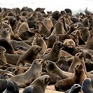 Cape Fur Seal Colony - Cape Cross, Namibia by Wild at Heart Namibia