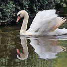 Queen of the Swans by Ann  Van Breemen