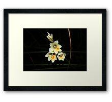Wildflower Season 3 Framed Print