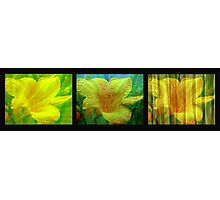 Day Lily - Water Lily - Wood Lily Photographic Print