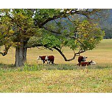 Delegate River Farm Photographic Print