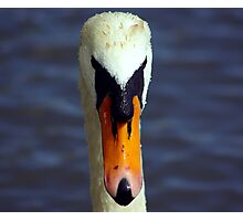 Face of the Swan Photographic Print