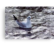 Seagull #1 Canvas Print