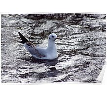 Seagull #1 Poster