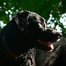 Sunlight Hound by Fleur Hallam