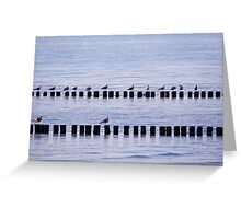 roost of the seagulls Greeting Card