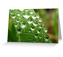 Grass Dew Drops Greeting Card
