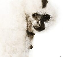 Gibbon #1 by Nola Lee Kelsey